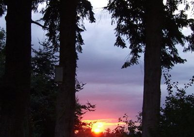 31_sunset_between_trees